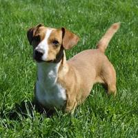 Adopt A Pet :: Chico - Central Point, OR