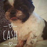 Adopt A Pet :: Cash - Maitland, FL