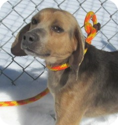 Beagle Mix Dog for adoption in Elmwood Park, New Jersey - Moondoggie