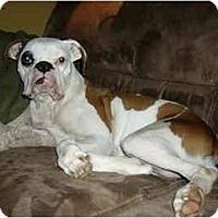 Adopt A Pet :: Milkshake - Savannah, GA