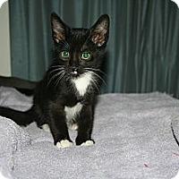 Adopt A Pet :: Figaro - Santa Rosa, CA