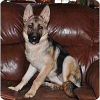 Adopt A Pet :: Tengaree - Hamilton, MT