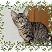 Adopt A Pet :: Star - KANSAS, MO
