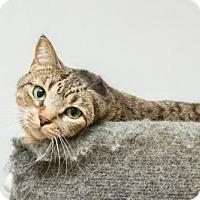 Adopt A Pet :: Midori - Frankenmuth, MI