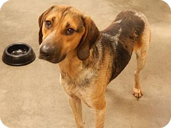 Hound (Unknown Type) Mix Dog for adoption in The Dalles, Oregon - Indie