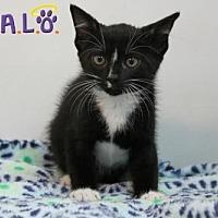 Adopt A Pet :: Rags - Sebastian, FL
