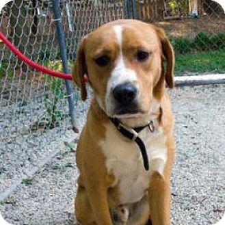 Retriever (Unknown Type) Mix Dog for adoption in Decatur, Georgia - TREVOR