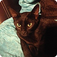 Adopt A Pet :: Mystic - Spring, TX