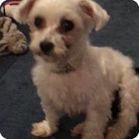 Adopt A Pet :: Chyna - Prole, IA