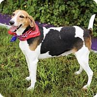 Adopt A Pet :: Reba - Lakeland, FL