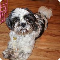 Adopt A Pet :: Champ - Studio City, CA