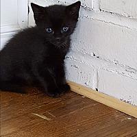 Adopt A Pet :: Gabby - Ronkonkoma, NY