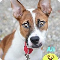 Adopt A Pet :: Ali - Bradenton, FL