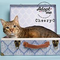 Adopt A Pet :: Cheery O - Pearland, TX