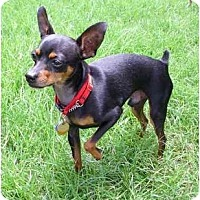 Adopt A Pet :: JaMocha - Nashville, TN
