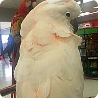 Adopt A Pet :: Alberta - Lenexa, KS
