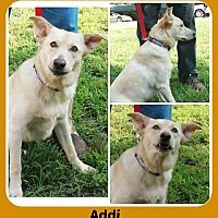 Adopt A Pet :: ADDY - Malvern, AR