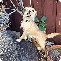 Adopt A Pet :: Layla - Davie, FL