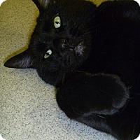 Adopt A Pet :: Puddin - Hamburg, NY