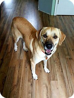 Labrador Retriever Mix Dog for adoption in Austin, Texas - Madee