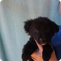 Adopt A Pet :: Ninja - Oviedo, FL