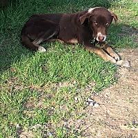 Adopt A Pet :: Rocky - Staunton, VA