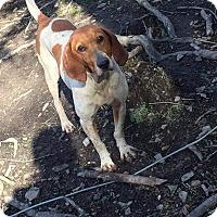 Adopt A Pet :: Lady - Baltimore, MD