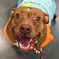 Adopt A Pet :: Lolly - Wichita, KS