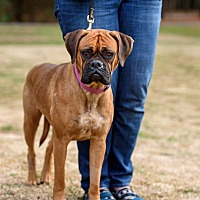 Adopt A Pet :: Remy - Richmond, VA