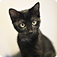 Adopt A Pet :: Kenya - Lincoln, NE