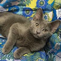 Adopt A Pet :: Boo - Addison, IL