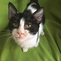 Adopt A Pet :: Stowe - Woodstock, GA