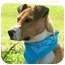 Photo 2 - Boxer/Terrier (Unknown Type, Medium) Mix Dog for adoption in Portsmouth, Rhode Island - Kirby