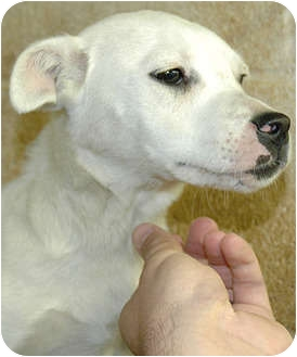 Terrier (Unknown Type, Medium) Mix Dog for adoption in Ripley, Tennessee - Missy