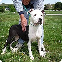 Adopt A Pet :: # 071-12 - ADOPTED! - Zanesville, OH