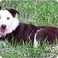 Adopt A Pet :: Belmont Bud--ADOPTED!!! - Tiffin, OH