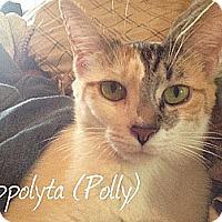 Adopt A Pet :: Polly - Lenhartsville, PA