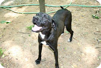 Labrador Retriever Mix Puppy for adoption in Cleveland, Georgia - Morty