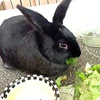 Adopt A Pet :: Babs - Conshohocken, PA