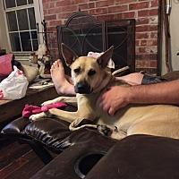 Adopt A Pet :: Kota - Plano, TX