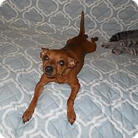 Adopt A Pet :: Chloe - Charlotte, NC