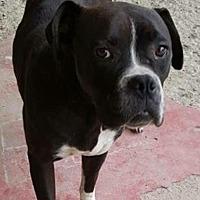 Adopt A Pet :: Riley - Long Beach, CA