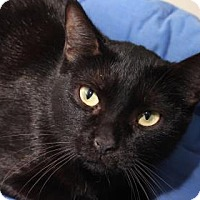 Adopt A Pet :: Blackie 5 - Venice, FL
