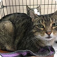 Adopt A Pet :: Dini - East Brunswick, NJ