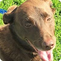 Adopt A Pet :: Sammy - San Francisco, CA