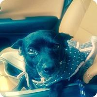 Adopt A Pet :: Nikita - Miami, FL