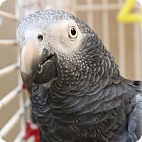 Adopt A Pet :: Mikey - Punta Gorda, FL