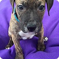 Adopt A Pet :: Tobias-Adopted! - Detroit, MI