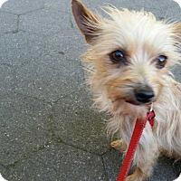 Adopt A Pet :: Sunny! - New York, NY