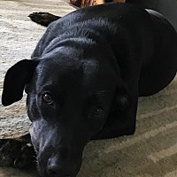 Adopt A Pet :: Finnian - Missouri City, TX